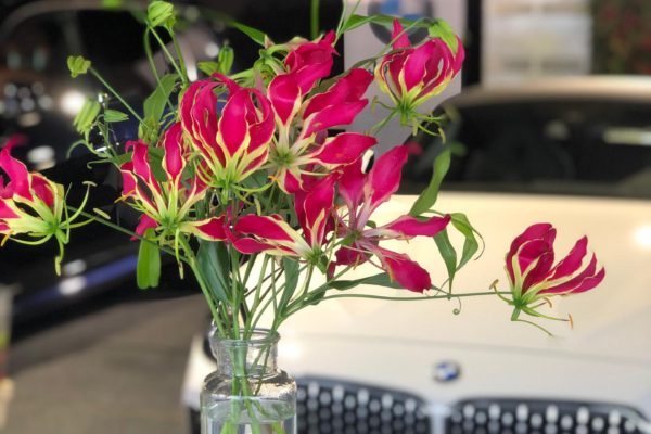 Classic Car Event Brasschaat Gloriosa Flowers by Frm
